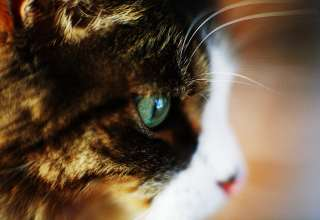 Depth_of_field-cats_head